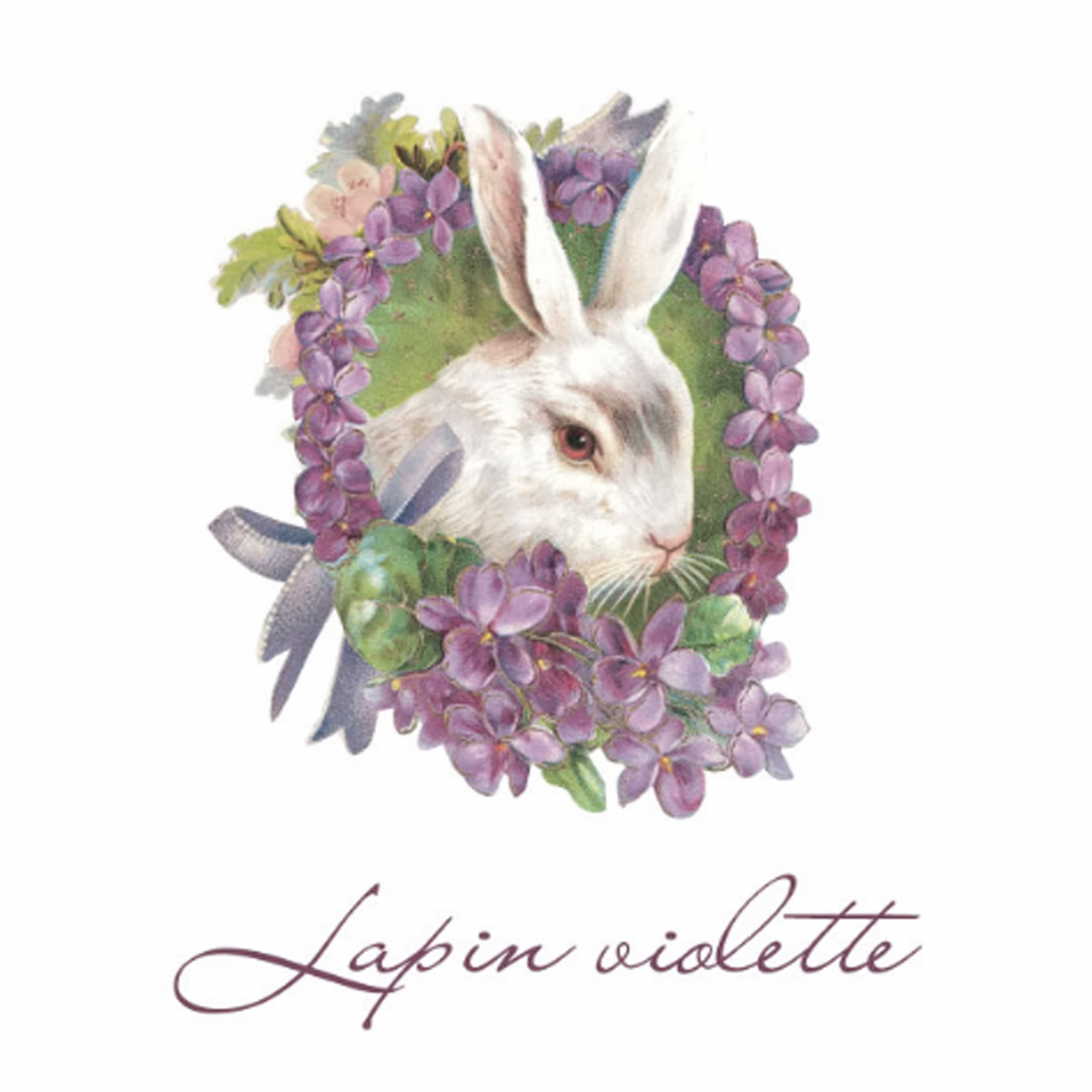 Lapin violette - ラパンヴィオレット